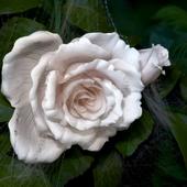 roza,priroda