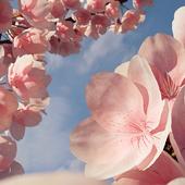 Скоро настоящая весна