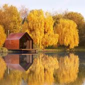 осень, такая осень.