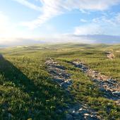 Весеннее поле