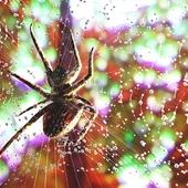 Spider  RedShift Render