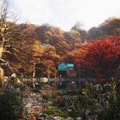 ....Yellow autumn....