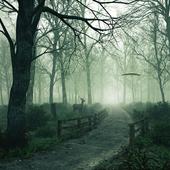 Лес в тумане (сделано по референсу)