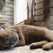 Спальня в стиле рустик и котик