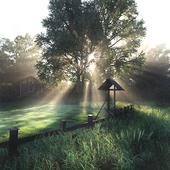 Morning silence (выполнено по референсу)
