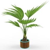 Plant_palm_vb