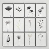 Постеры с изображением растений