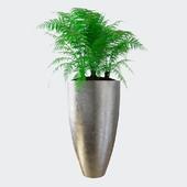 Fern \ Metallic pot
