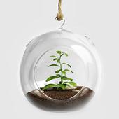 Terrarium for Herbs