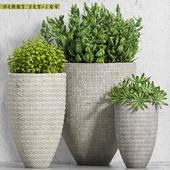 plant set-109