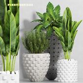 plant set-111