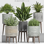 plant set-113