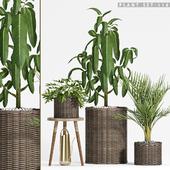 Plant set-116
