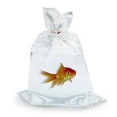 рыбка в пакете