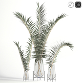 Dry palm leaves in Echasse vases