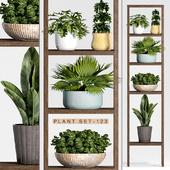 Plant set-123