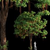 Barringtonia Acutangula 03
