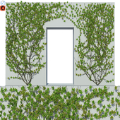Ivy Wall 04
