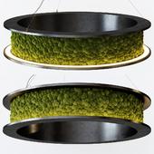 Freund Nova Ring Moss Pendant Light