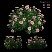 Rose plant set 24