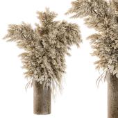 Dry Plants 19