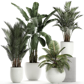 Коллекция растений 674.
