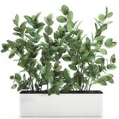 Коллекция растений 675.