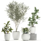 Коллекция растений 676.