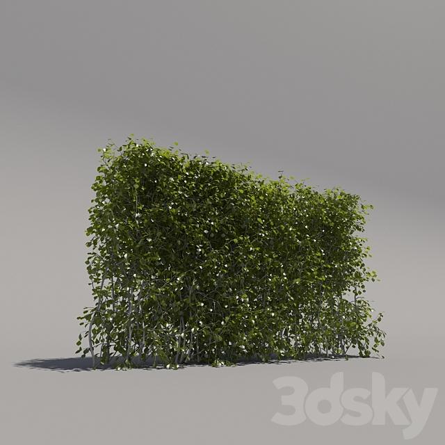 Bush trimmed, low