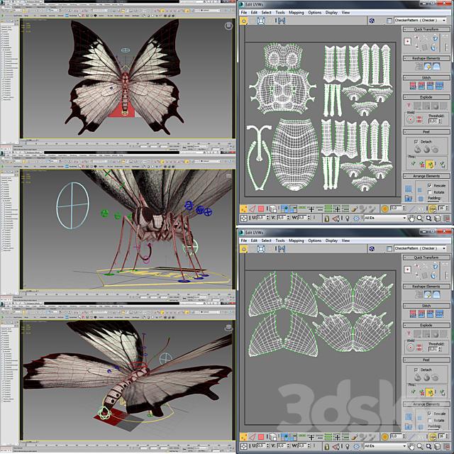 Baterfly_01