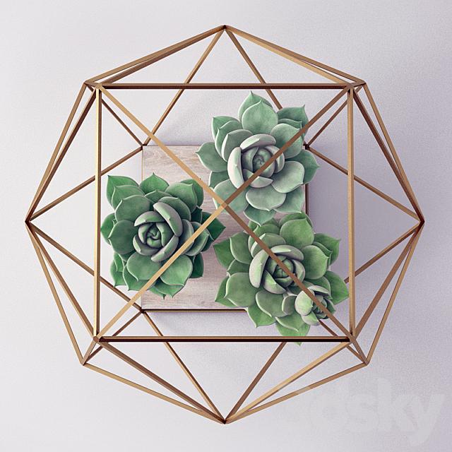 Sempervivum / Stone Rose / young