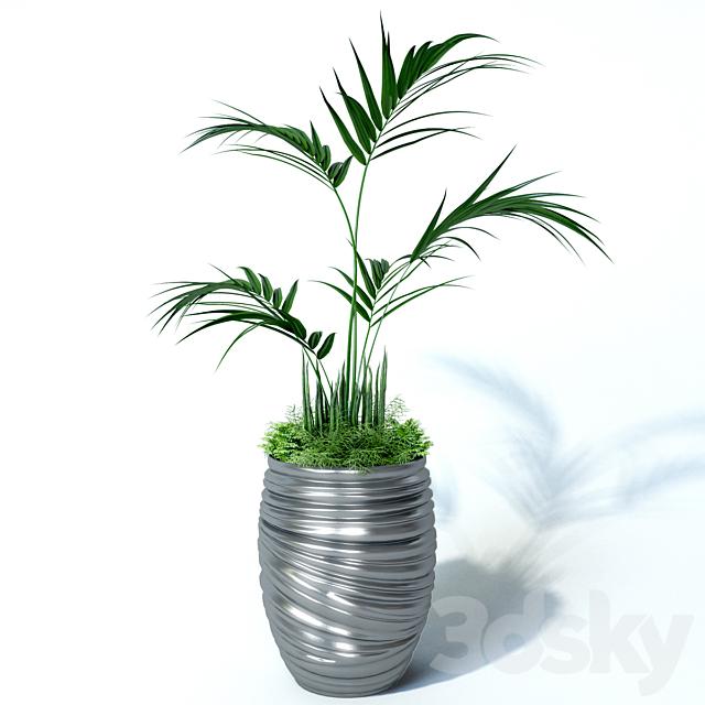 Howea palm composition