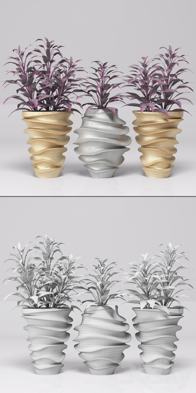 Plants in pots. Gold & Silver