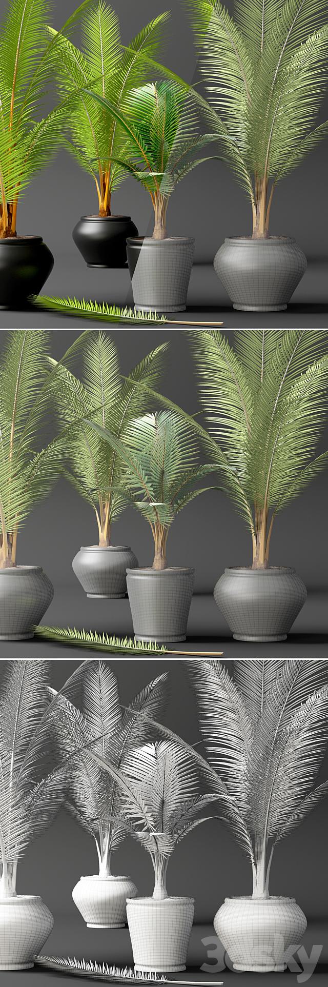 Coconut palm set