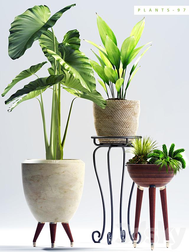 PLANTS 97