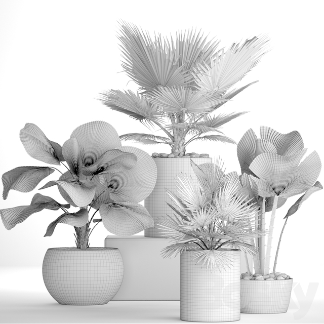 The collection of plants in pots 21