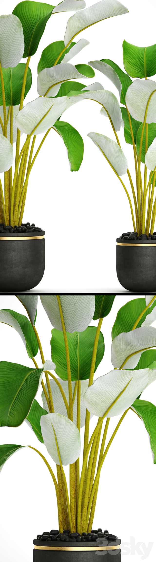 Collection of plants in pots 31
