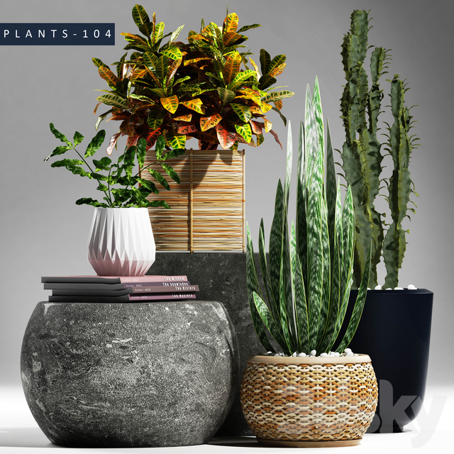 PLANTS 104