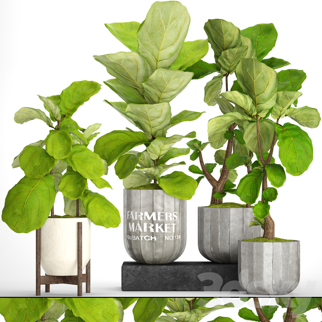 A collection of plants in pots. 53