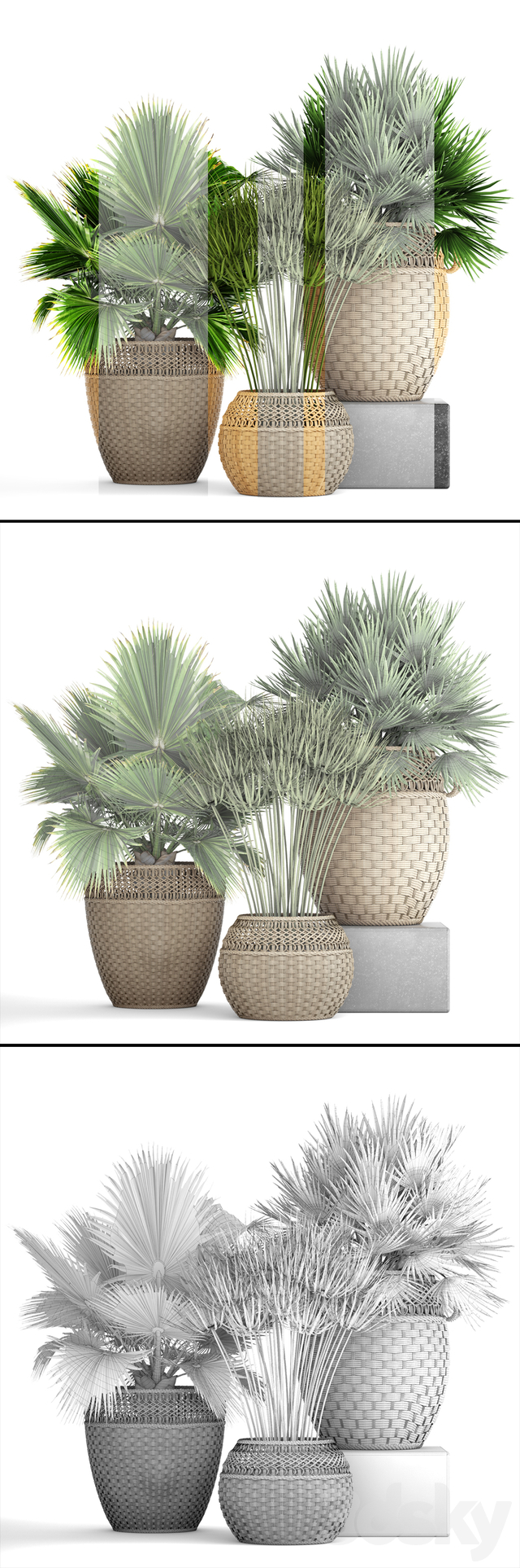 Collection of plants 103.