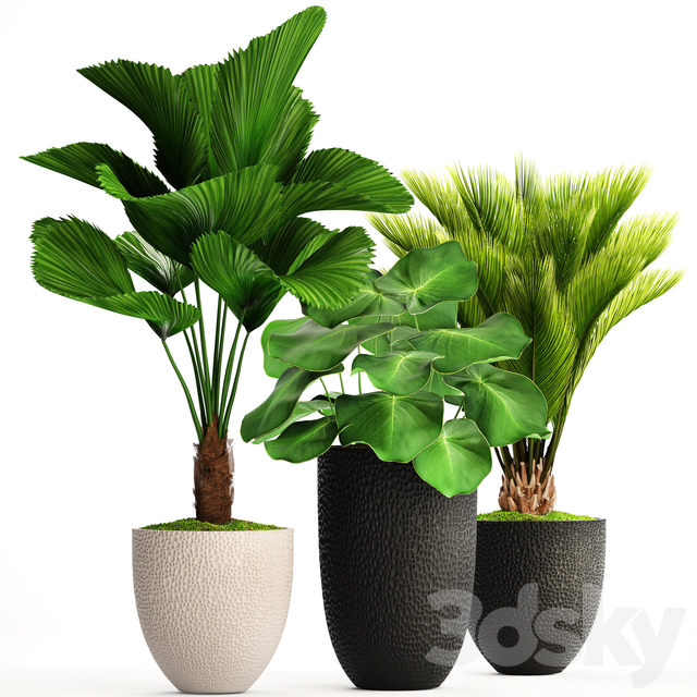 Collection of plants 116.
