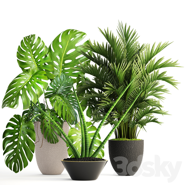 Collection of plants 124.