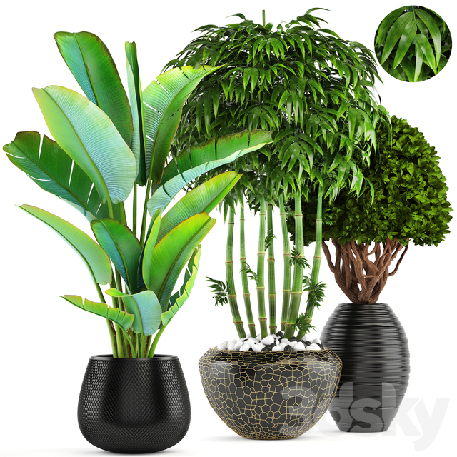 Collection of plants 137.
