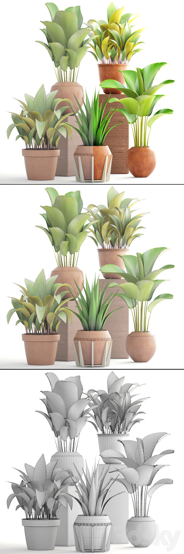 Collection of plants 172. Clay pots.