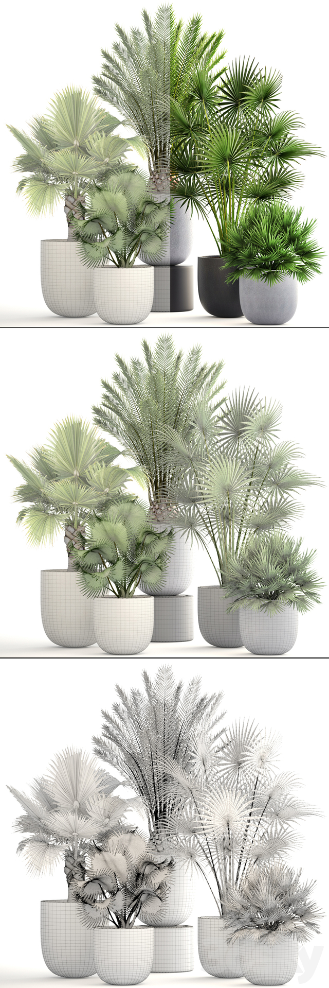 Collection of plants 185.