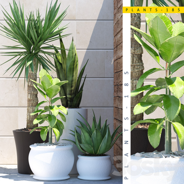 PLANTS 185