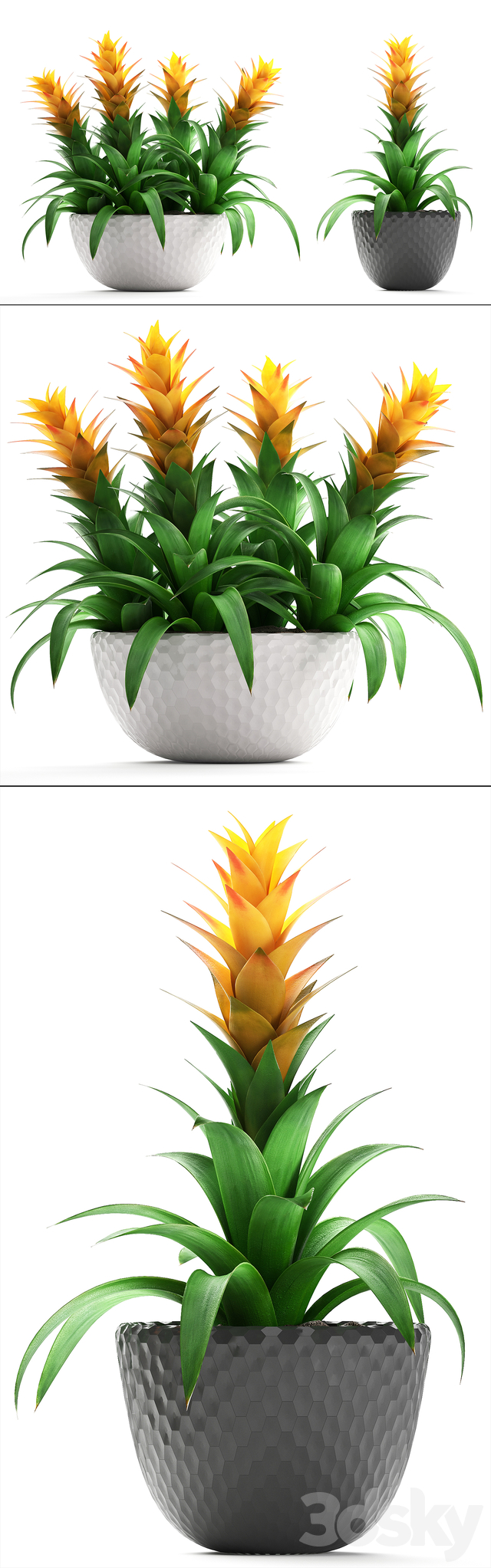 Collection of plants 229. Bromelia.