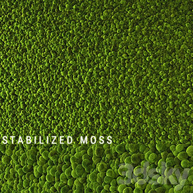 Stabilized Moss 2