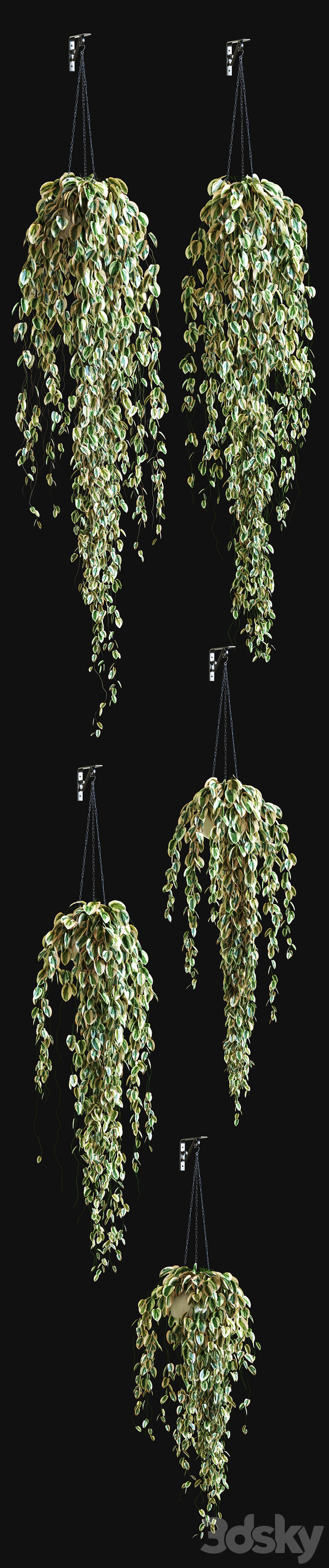 Potted plant on a chain