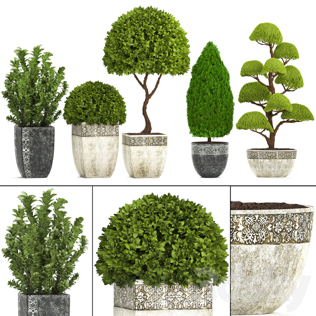 Plant collection 239.